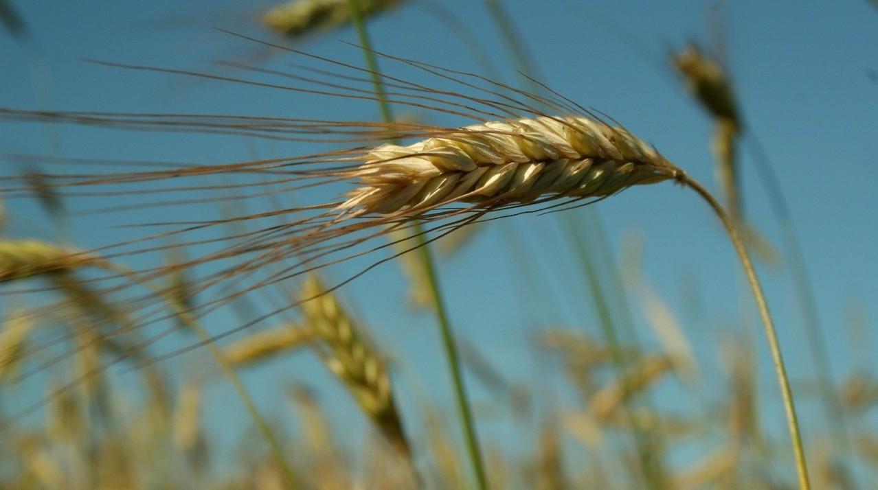 Nawozy granulowane do trawników
